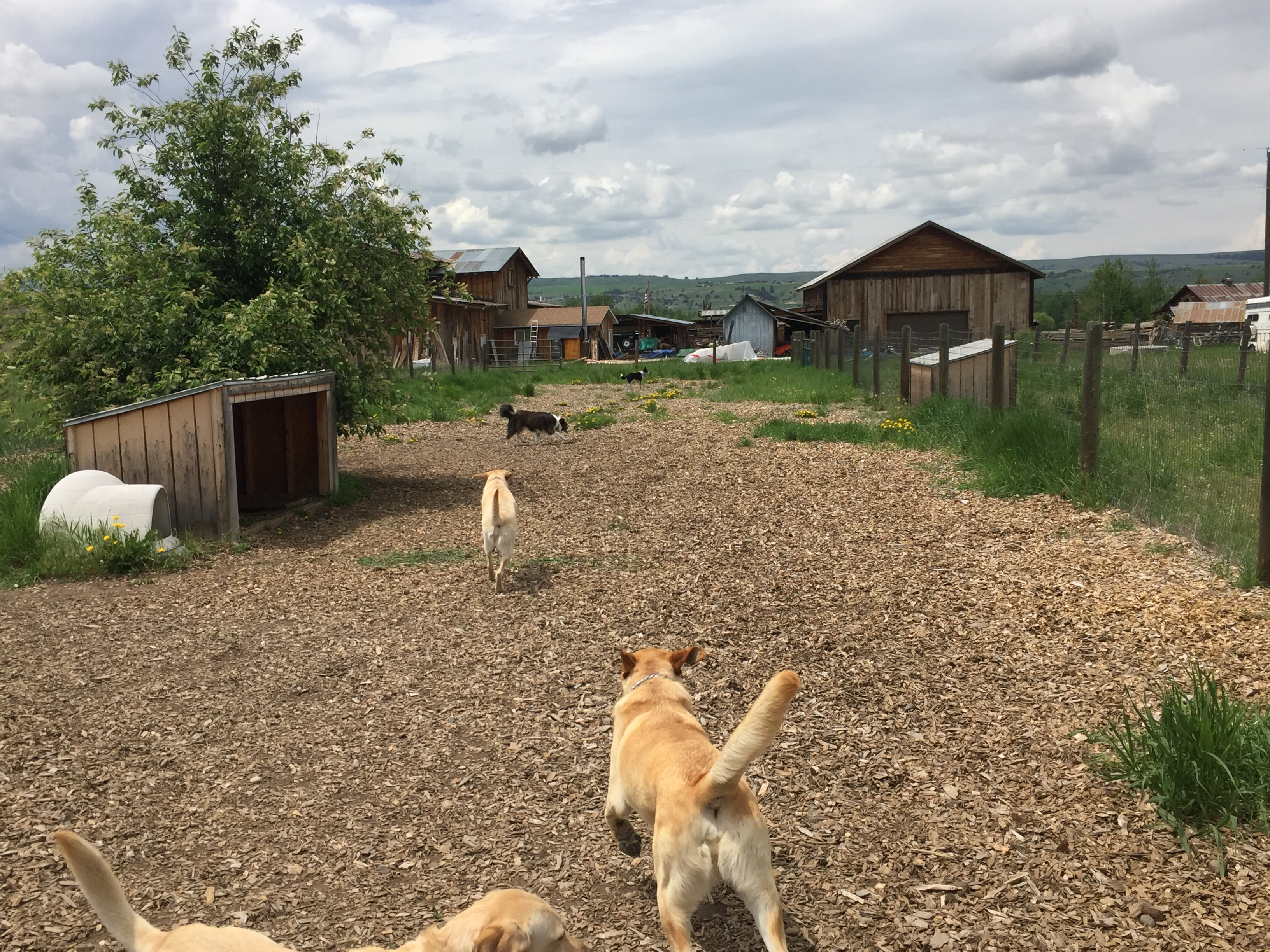 Doggie Daycare & Motel | Gallatin Gateway, Bozeman, MT
